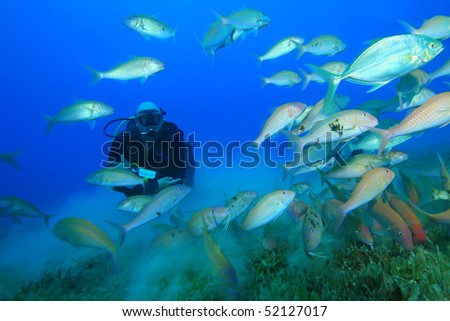 Scuba Diver swims through a shoal of goatfish, snappers and jackfish