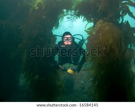 Scuba Diver swims through the Kelp towards the Camera