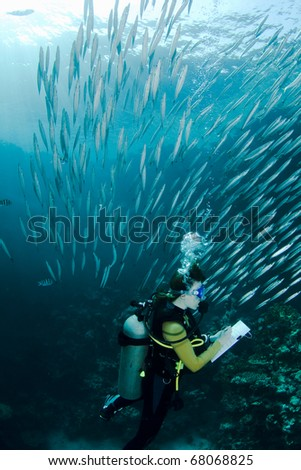 Scuba diver taking notes during an underwater Scuba lesson, surrounded by a school of small Baracudas
