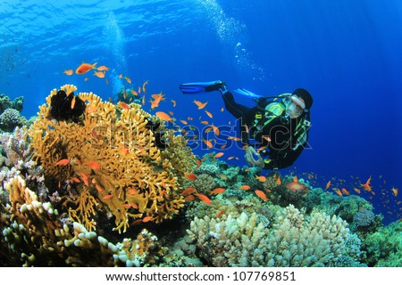Stock Photo Scuba Diver, Tropical Fish and Coral Reef