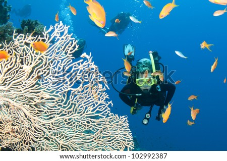 scuba diver with fish and coral on the great barrier reef