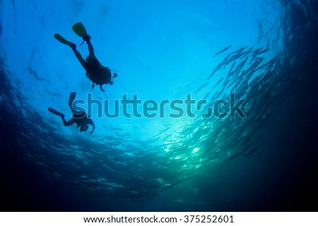 Scuba divers and shoal of barracuda fish #375252601
