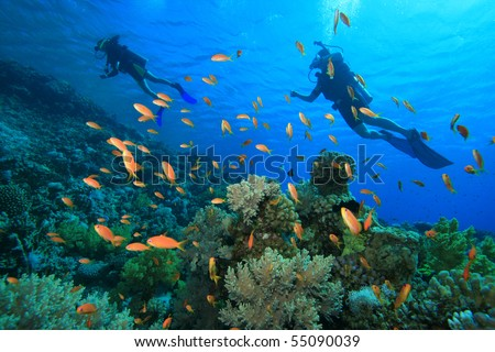 Scuba divers explore a coral reef