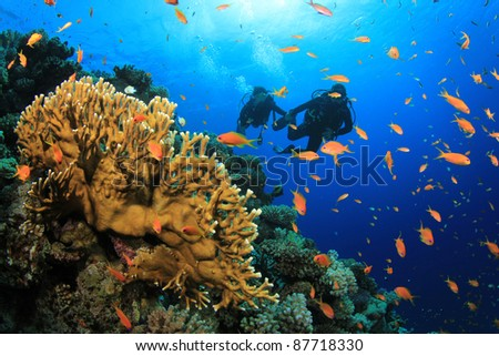 Scuba Divers explore a Coral Reef in the Sea