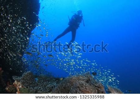 Scuba divers explore coral reef  #1325335988