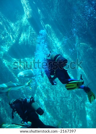 scuba divers in Cape Town ,South Africa