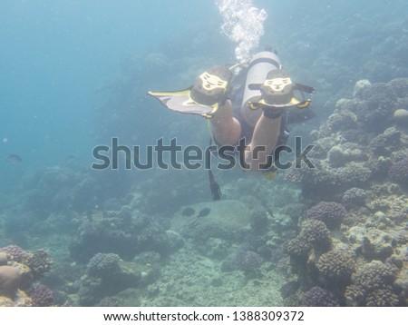 Scuba Divers in the Red Sea #1388309372
