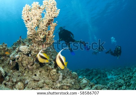 Scuba divers in the red sea