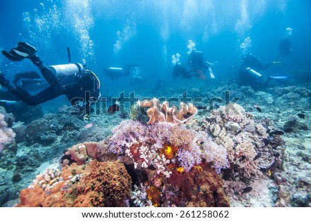 Scuba Divers passing through colorful tropical coral reef with fishes. #261258062