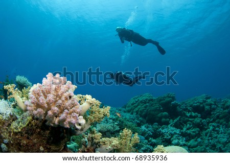 scuba divers silhouetted and pink coral