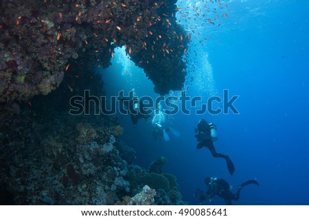 Scuba divers swim over colorful tropical coral reef, Red sea, Egypt. #490085641