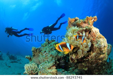 Scuba Divers swim over coral reef with Clown fish in an Anemone