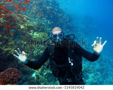 Scuba diving. A diver is posing underwater. Red Sea , Egypt                           #1145819042