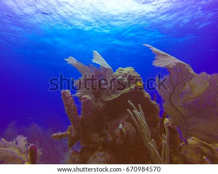 Scuba Diving In Belize Turneffe Atoll from Caye Caulker #670984570