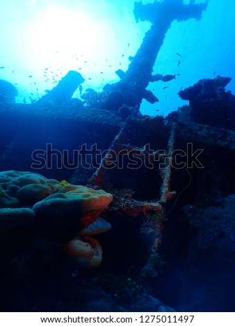 Scuba diving in Rabaul , Kokopo on Atun Wreck located next to Little Pigeon Island . East New Britain , Papau New Guinea scuba diving .  #1275011497