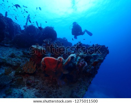 Scuba diving in Rabaul , Kokopo on Atun Wreck located next to Little Pigeon Island . East New Britain , Papau New Guinea scuba diving .  #1275011500