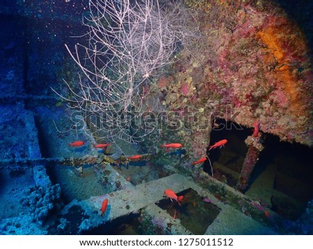 Scuba diving in Rabaul , Kokopo on Atun Wreck located next to Little Pigeon Island . East New Britain , Papau New Guinea scuba diving .  #1275011512