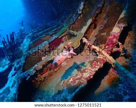 Scuba diving in Rabaul , Kokopo on Atun Wreck located next to Little Pigeon Island . East New Britain , Papau New Guinea scuba diving .  #1275011521