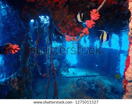 Scuba diving in Rabaul , Kokopo on Atun Wreck located next to Little Pigeon Island . East New Britain , Papau New Guinea scuba diving .  #1275011527