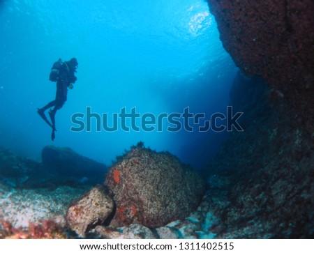 Scuba Diving Malta - Wreck Caverns Marine Life #1311402515
