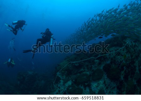 scuba diving on a beautiful soft coral reef and fish in South Andaman, Thailand #659518831