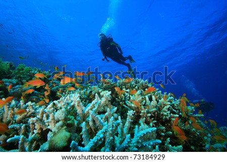 Scuba Diving on a colorful tropical Coral Reef #73184929