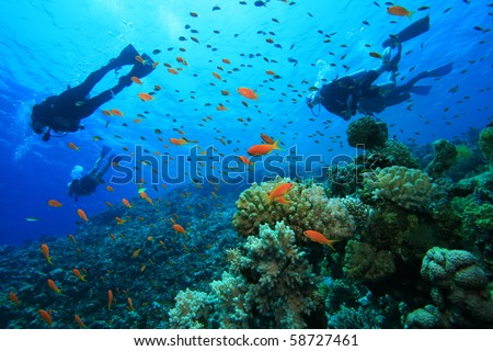 Stock Photo Scuba Diving on a Coral Reef with Tropical Fish