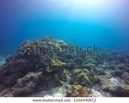 Scuba diving scene #1266440812