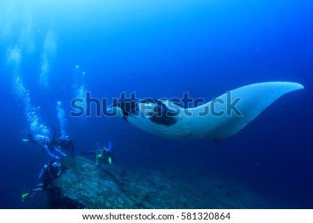 Scuba diving with manta ray #581320864