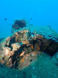 Scuba Diving world war 2 plane wreck in rabaul / Kokopo A6M2 Model Mitsubishi A6M Zero