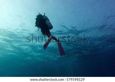 scuba girl and school of barracuda in deep blue sea #579598129