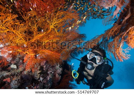 Scuba girl diving at the colourful coral reef