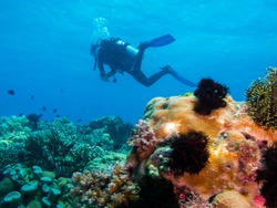 scubadiver swims over a corals, Philippines