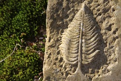 Sculpted artistic leaf in a stone