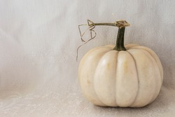 Sculptural white pumpkin gourds and stems against white background