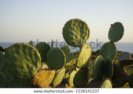 Sculpture and Cactus park in Ayia Napa, Ciprus Stock fotó ©