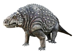 Scutosaurus (Shield lizard) is the herbivore genus of Parareptiles. It armor-covered Pareiasaur that lived during the Late Permian Period, Scutosaurus isolated on white background with clipping path