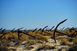 Sea anchors on the beach with yellow flowers against the blue sky. Tavira. Portugal