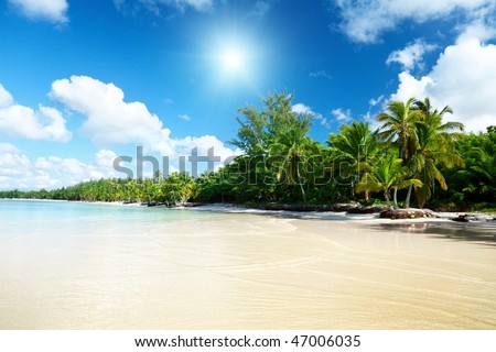 sea and coconut palms