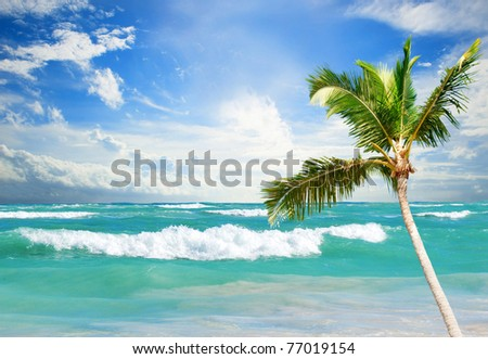 Sea and palm, paradise, idyll