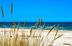Sea and sandy beach view through grass from dunes, empty beach and blue sky, nature backgrounds, Leba, Baltic Sea, Poland
