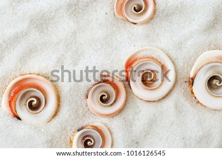 Sea background with cope space.   Summer concept. Sea shells on white sand. Top view. Swirling seashells. Top view. Flat lay.