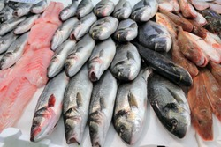 sea bass and bream fresh fish at the market