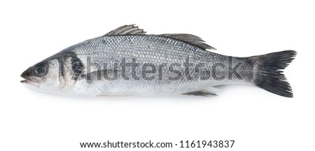Sea bass fish isolated on white background