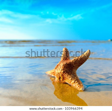 Sea Beach Star