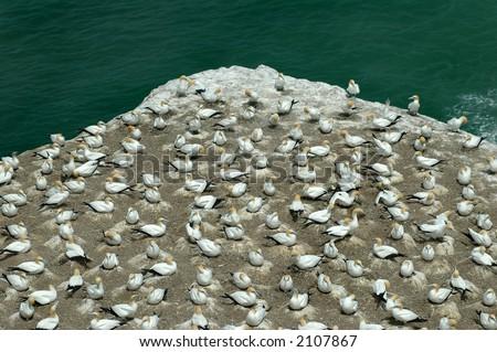 Sea bird Breeding Colony