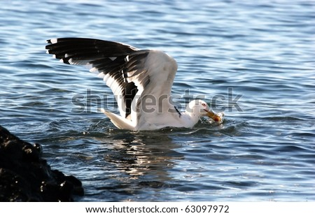 sea bird feeding off coast of Antarctica