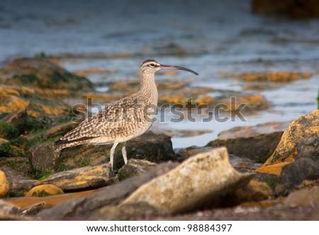 Sea Bird In paracas natural reserve, Peru - stock photo