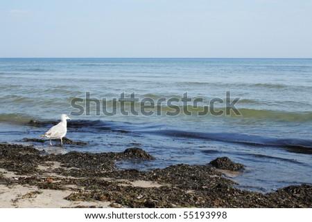 Sea bird on dirty beach