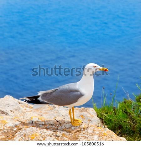sea bird on perfect mediterranean sea in Balearic islands seagull
